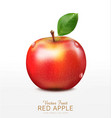 ruddy apple with green leaf isolated vector image vector image