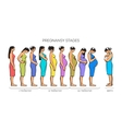 Women Pregnancy Stages vector image