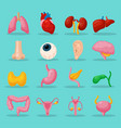 human body organs vector image