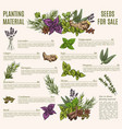 herb and spice poster template for organic shop vector image