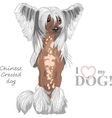dog Chinese Crested breed vector image vector image