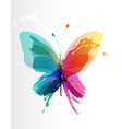 Colorful butterfly created from splash and colored vector image vector image