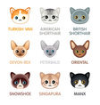 Cute cat icons set III vector image