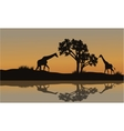 Giraffe at sunset scenery vector image