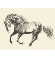 Horse Vintage Engraved  Hand Drawn vector image