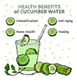 Cucumber Benefits Image vector image