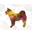 American Akita in watercolor vector image vector image