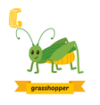 Grasshopper G letter Cute children animal alphabet vector image