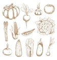 Farm vegetables sketches in vintage style vector image