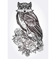 Hand drawn Owl with roses vintage style vector image