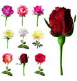 9 decorative roses vector image