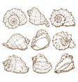 Hand drawing seashell set vector image