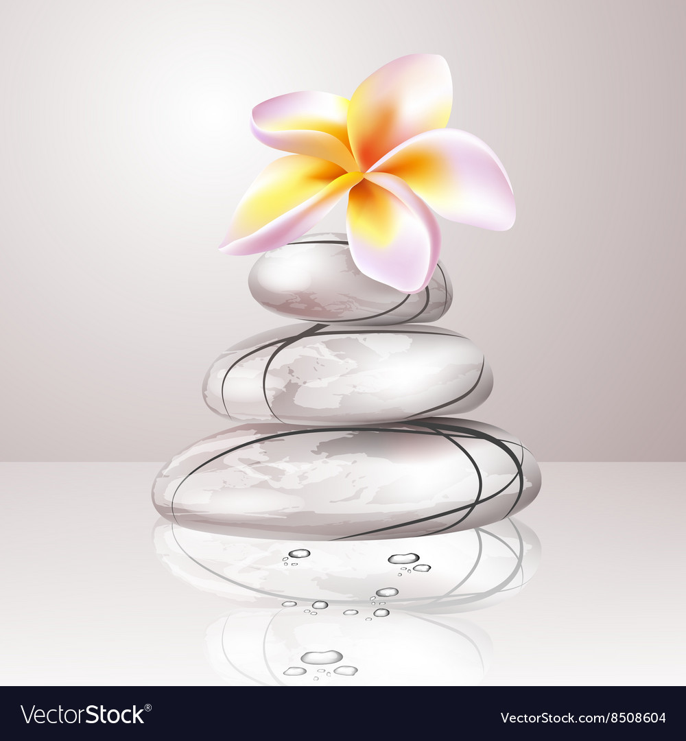 Spa orchid design vector
