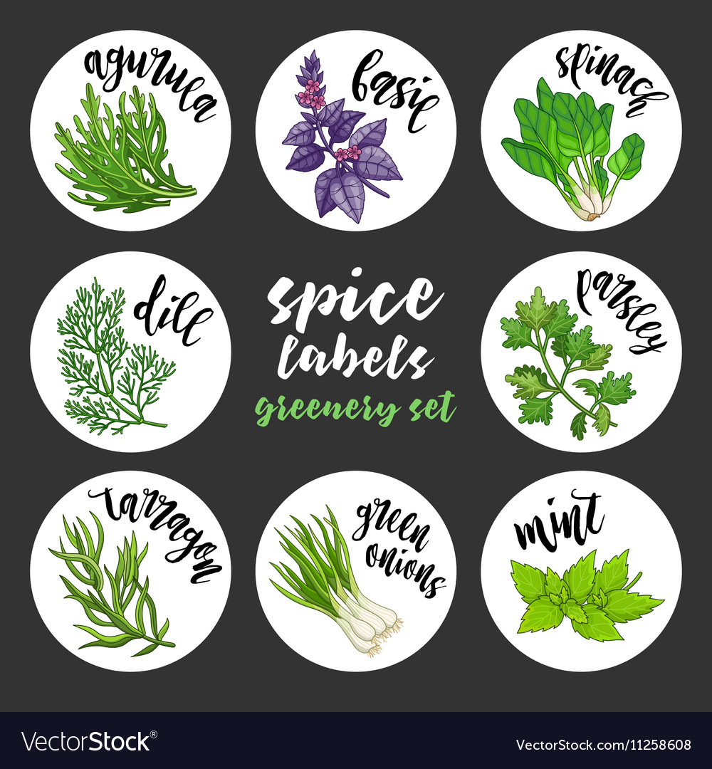 Spices herbs labels colored greenery set vector