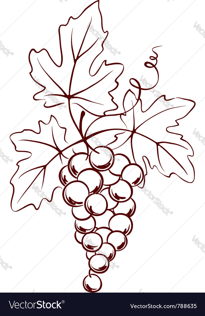 Bunch of grapes with leaves vector