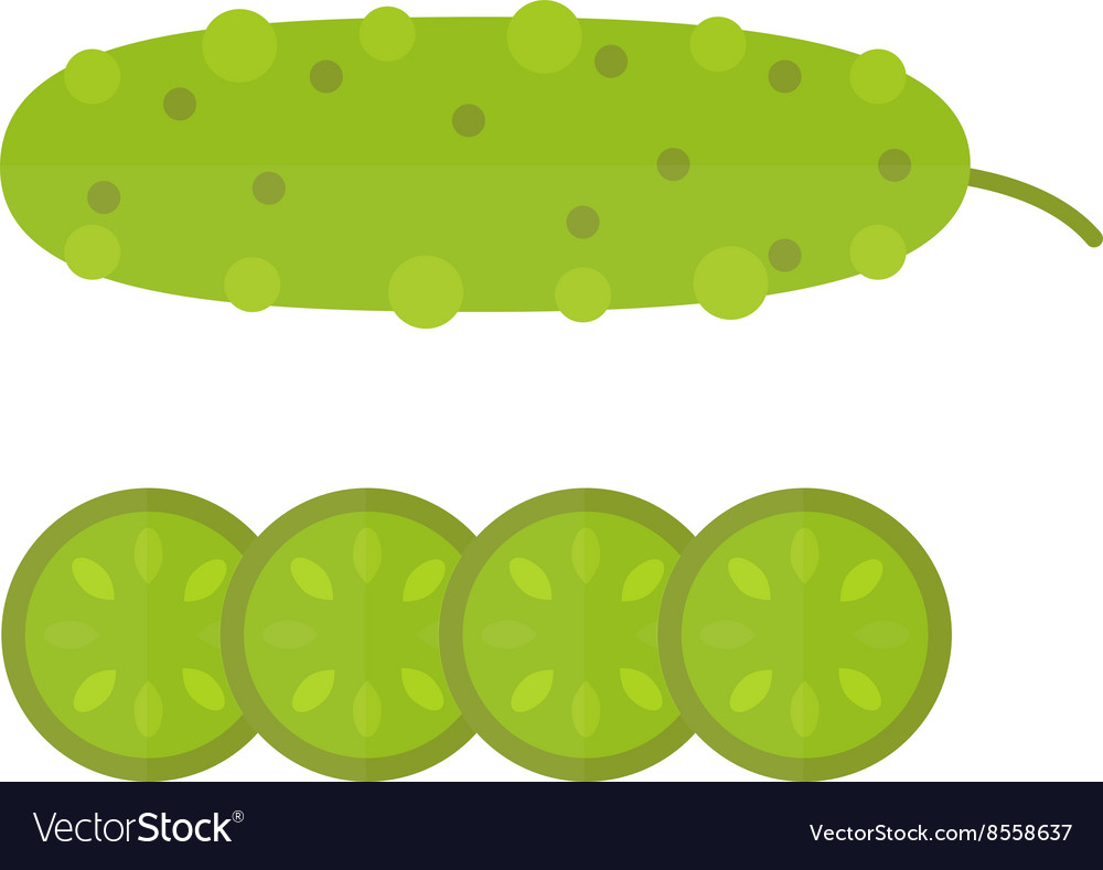 Fresh green cucumber cut sliced cooking vector