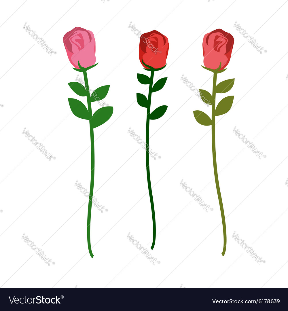 Set of three roses of different colors on a white vector