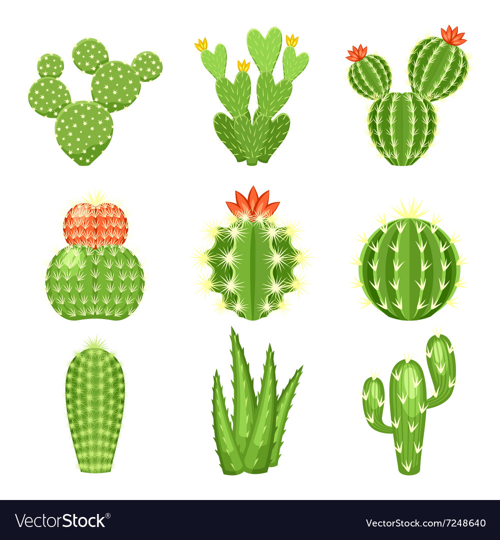 Icon set of colored cactus and succulent vector