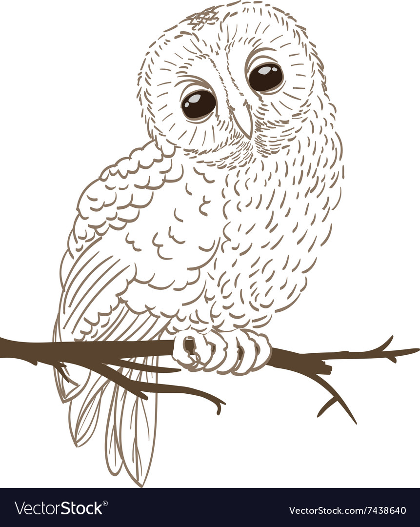 Owl sitting on a twig vector