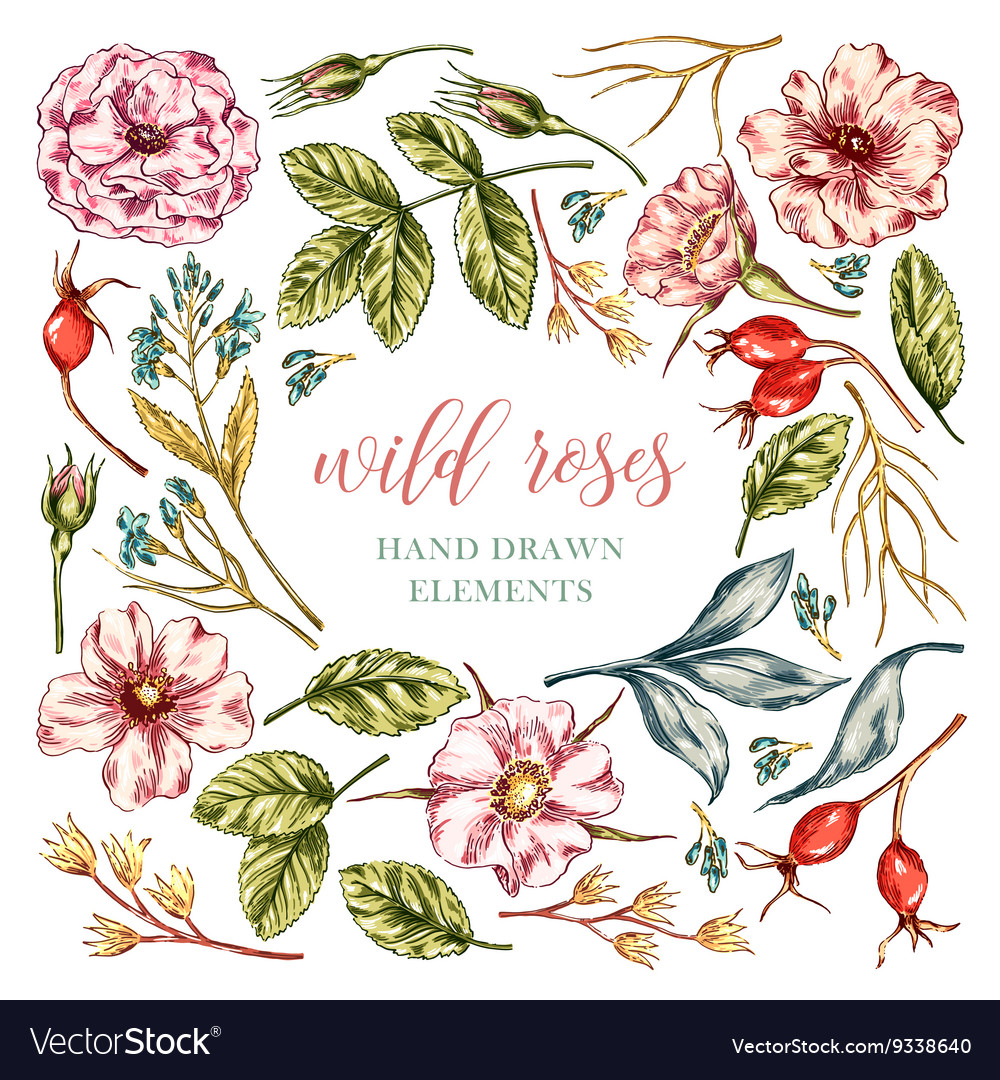 Wild rose flowers elements vector
