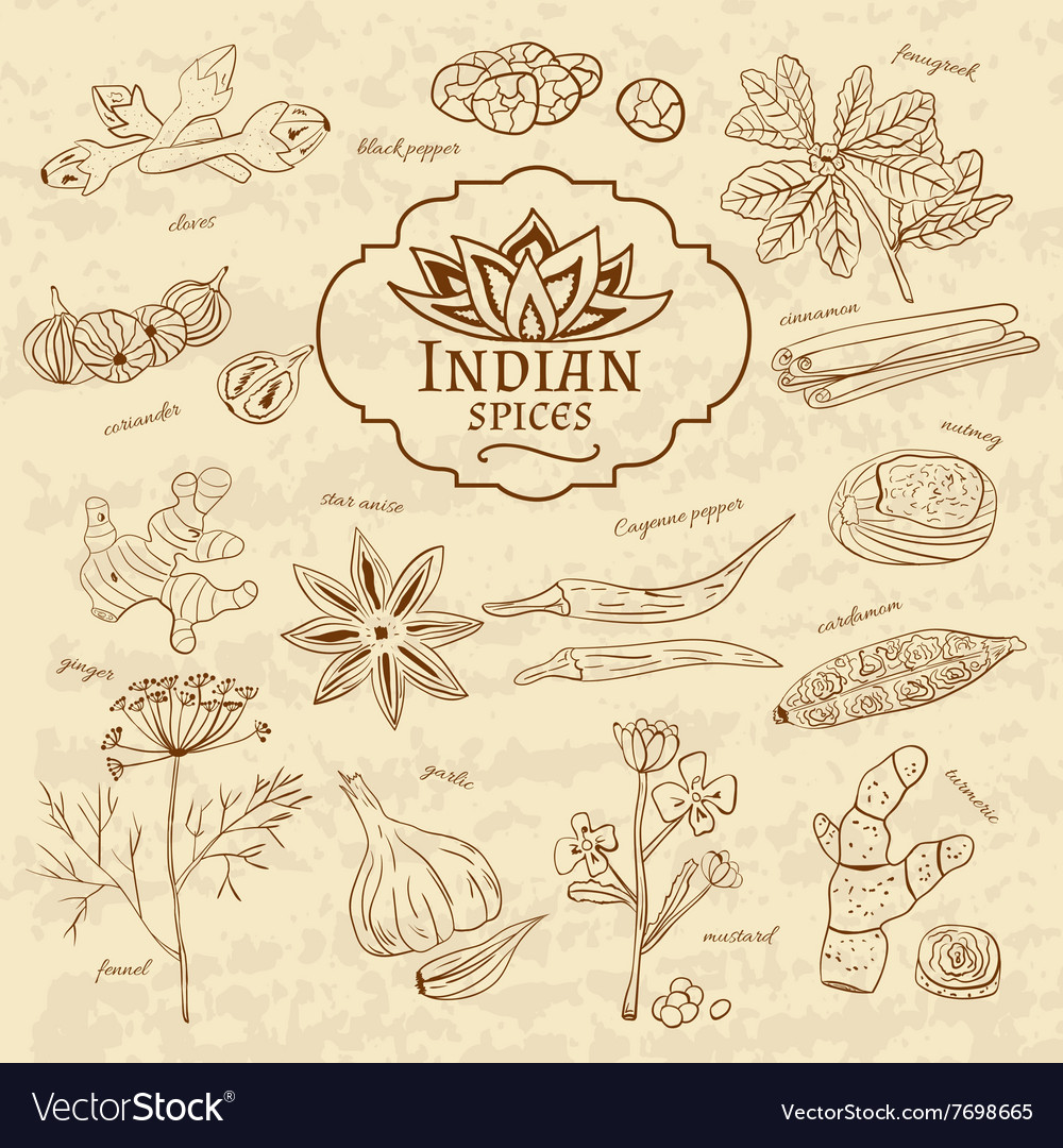 Set of spices and herbs cuisines of india on old vector