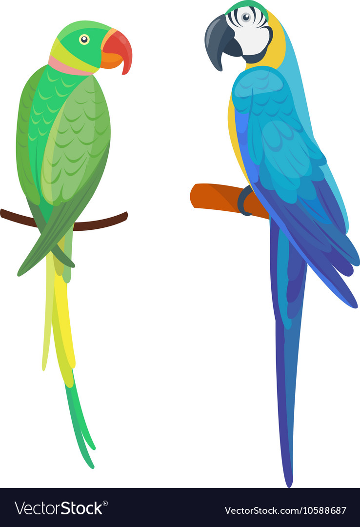 Cartoon parrot bird vector