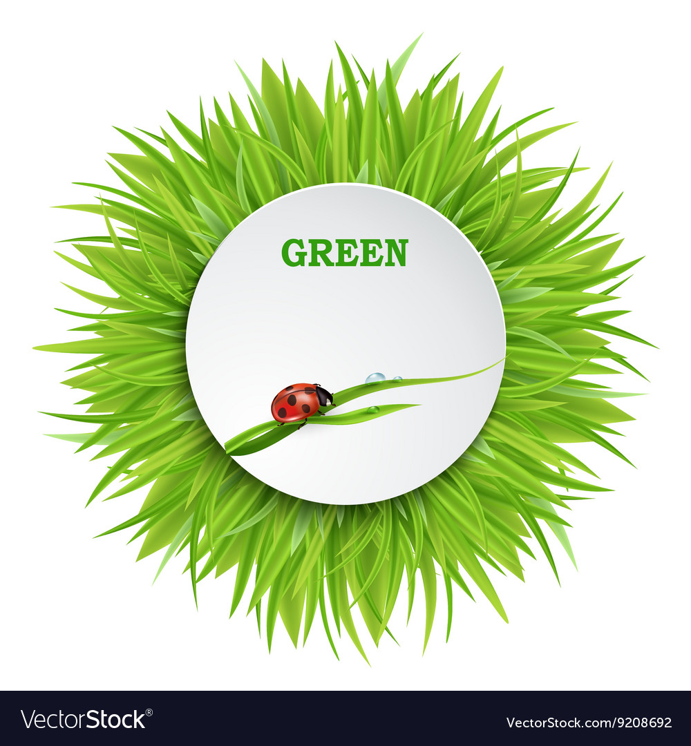 Banner with green grass vector
