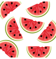 Watermelon background isolated vector image