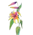 Beautiful color lily vector image