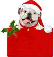 christmas english bulldog vector image
