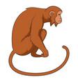 monkey icon cartoon style vector image