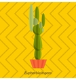 Tropical plants cactus in flat style vector image