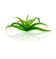 Bush Aloe Vera vector image