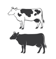 Two cows vector image