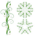white snowdrop flowers vector image