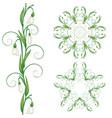 white snowdrop flowers vector image