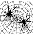 spider network vector image vector image