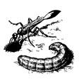 sand digger wasp vector image vector image
