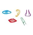 Five senses icon set - vector image