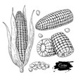 corn hand drawn set isolated vector image vector image