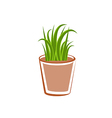 Flowerpot with green grass plants vector image vector image