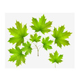 Summer leaf maple and maple branch vector image