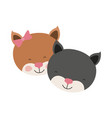 colorful caricature faces of kitten couple animal vector image