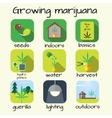 Marijuana growing icon set vector image
