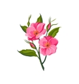 Dog Rose Hand Drawn Realistic vector image