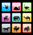 wild animals buttons set vector image