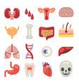 human internal organs flat icons vector image