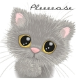 Cute british kitten vector image