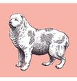 Dog Shepherd Caucasian Mid-Asian vector image