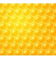 honey making in honeycombs vector image